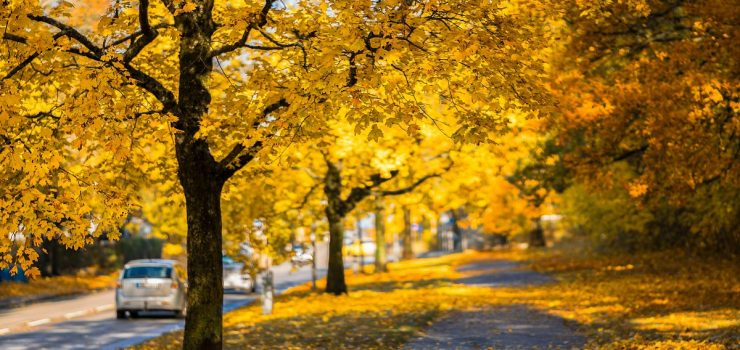 Jesenji saveti za voznju